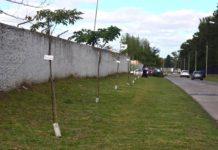 plantan arboles en ciudad jardin