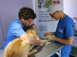 castracion mascotas san isidro
