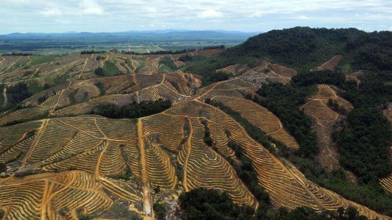 desforestacion en asia